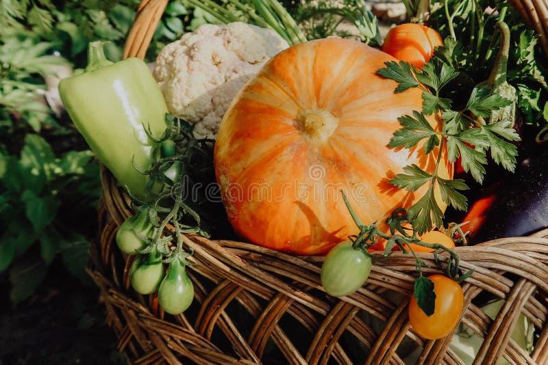 在篮子的农厂菜 有机菜新鲜的庭院 库存照片