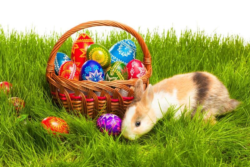 在篮子的复活节彩蛋和兔宝宝 库存图片