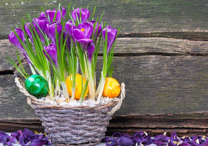 在篮子的复活节彩蛋在番红花之间 库存照片