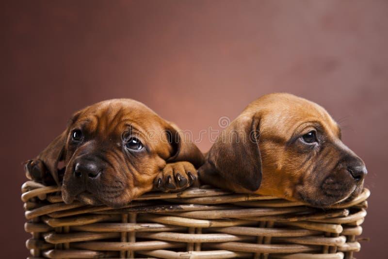 在篮子的小狗 免版税库存图片