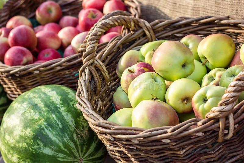 在篮子的成熟新鲜的绿色和红色有机苹果在市场上 苹果庭院地面收获成熟时间结构树 购物在地方室外农夫的新鲜水果 免版税库存图片