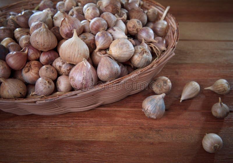 在篮子的新唯一大蒜头在木头构造了唯一garl 库存图片