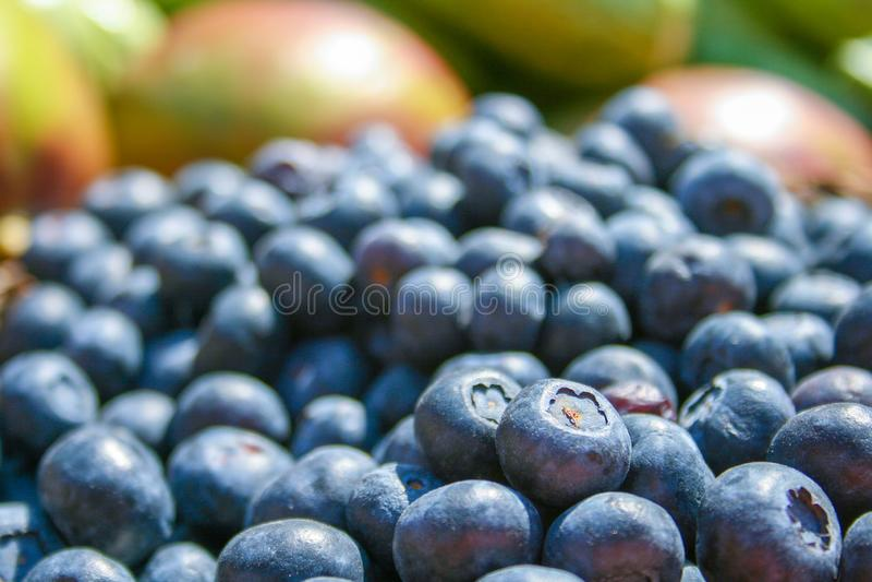 在篮子的新鲜的有机成熟蓝莓 库存照片