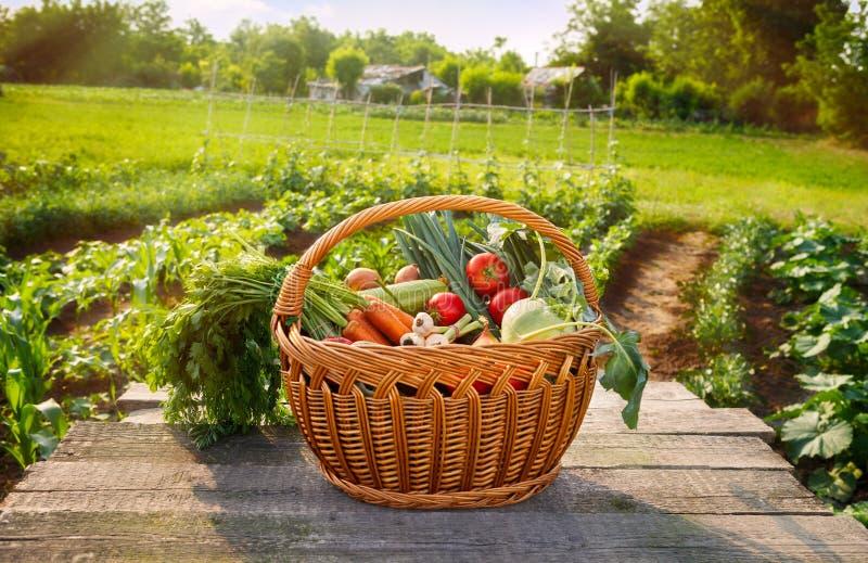 在篮子的新鲜的有机菜 库存图片