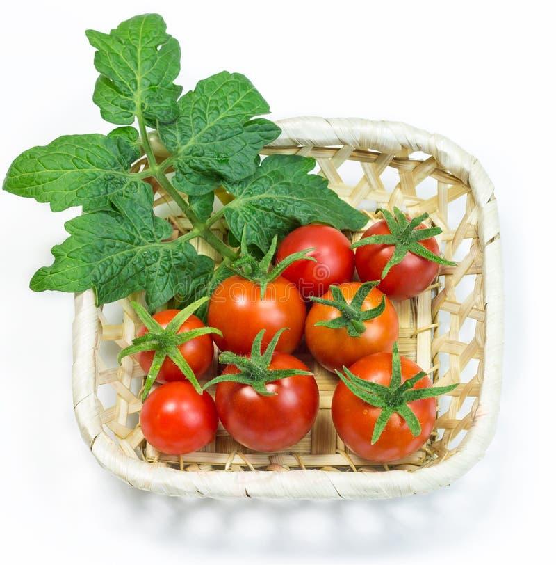 在篮子的新鲜的红色蕃茄在白色背景 免版税库存照片