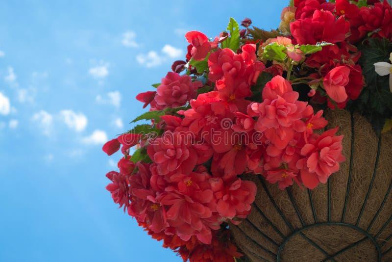 在篮子的春天花 免版税图库摄影