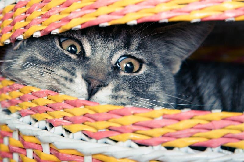 在篮子的猫 免版税图库摄影