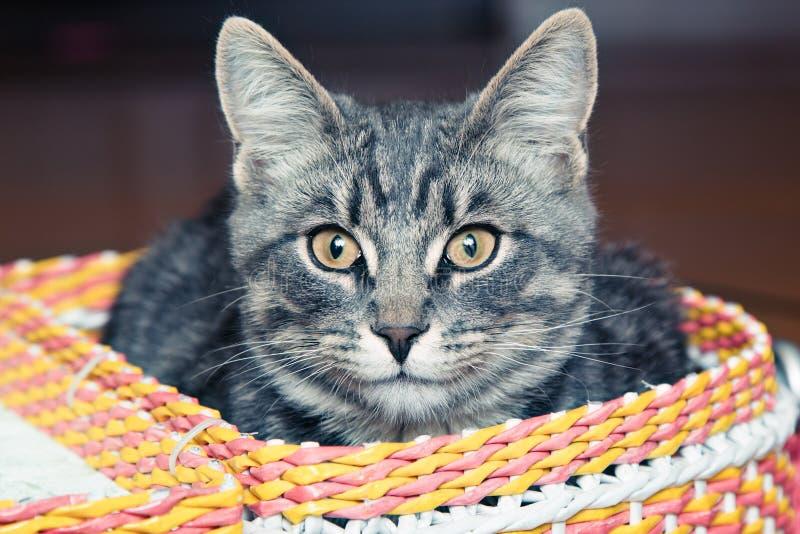 在篮子的猫 免版税库存照片