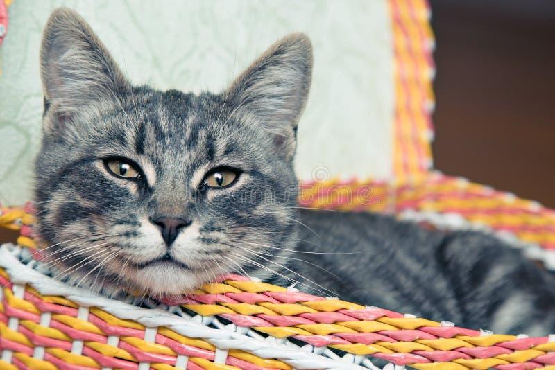 在篮子的猫 库存图片