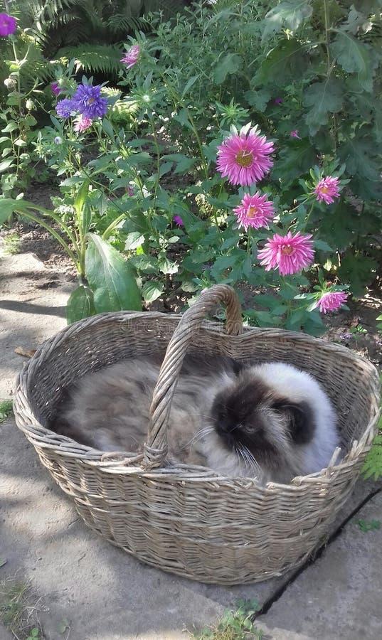 在篮子的猫 免版税库存图片