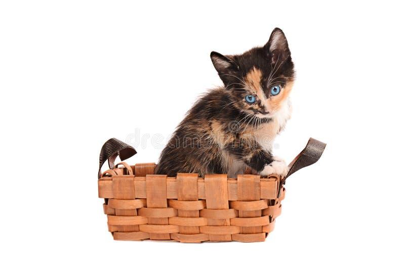在篮子的白棉布小猫 免版税库存照片