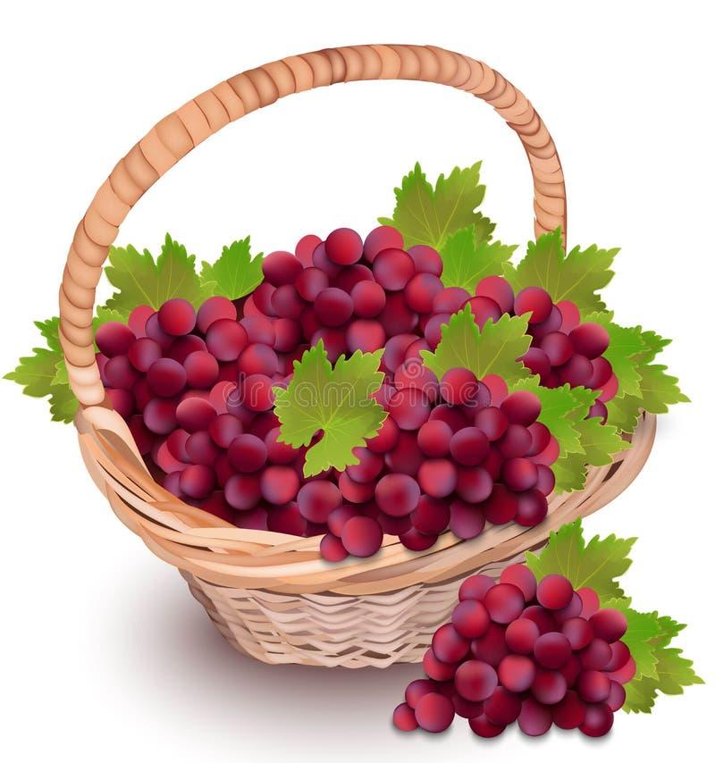 在篮子的红色主要葡萄 季节收获传染媒介现实例证 向量例证