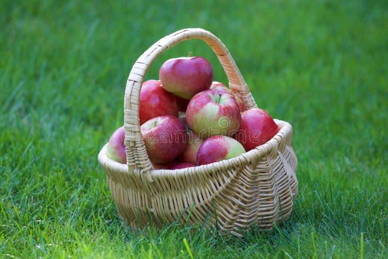 在篮子的红色苹果 免版税库存图片