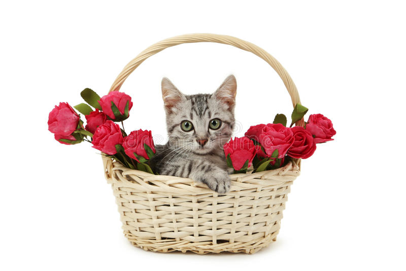 在篮子的美丽的猫与在白色背景隔绝的花 免版税图库摄影