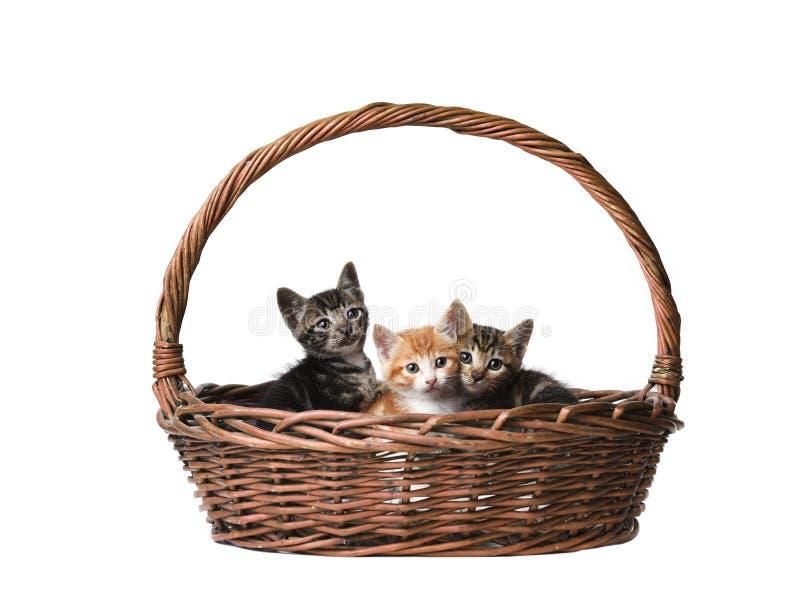在篮子的逗人喜爱的猫 免版税库存照片