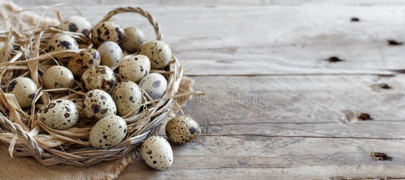 在篮子的鹌鹑蛋 免版税库存图片