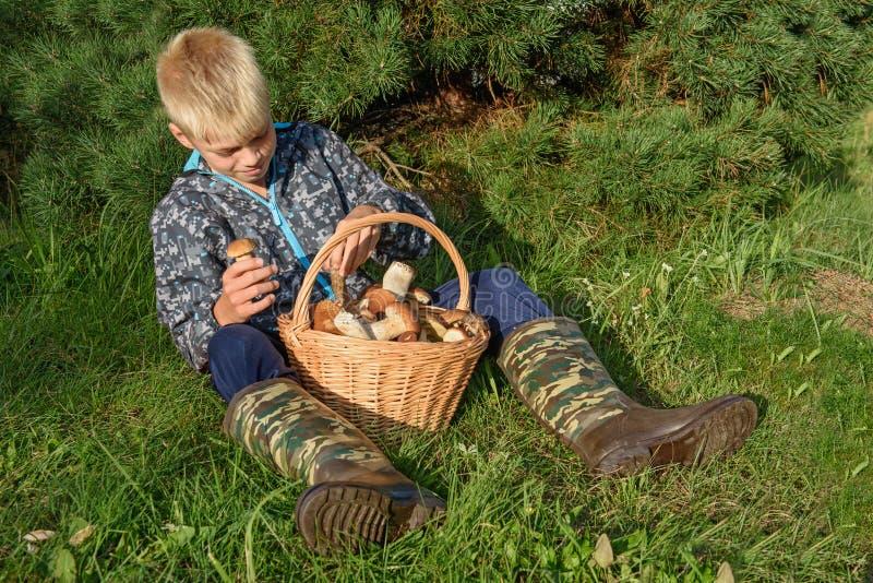在篮子的Cepes,森林蘑菇 库存照片