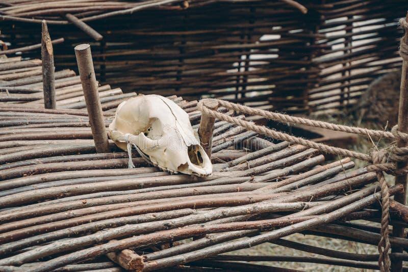 在篱笆条操刀的绵羊头骨 图库摄影