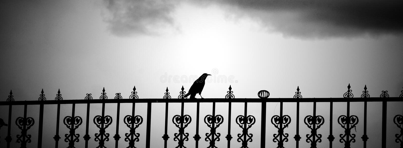 在篱芭停止的一只孤独的老鹰 免版税库存图片