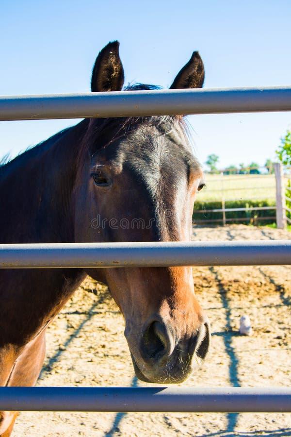 在篱芭的其他边的马 免版税库存图片