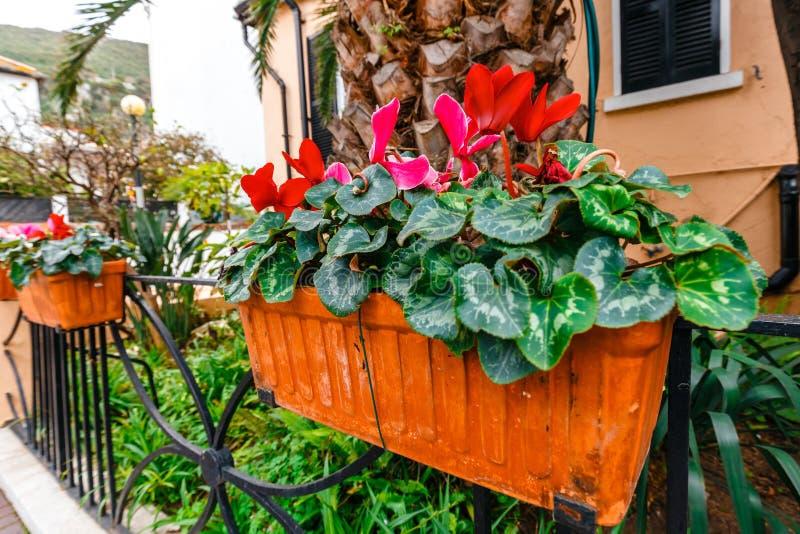 在篱芭的盆的春天花 库存照片