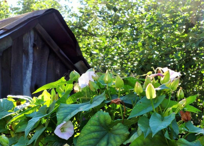 在篱芭的野生植物 库存图片
