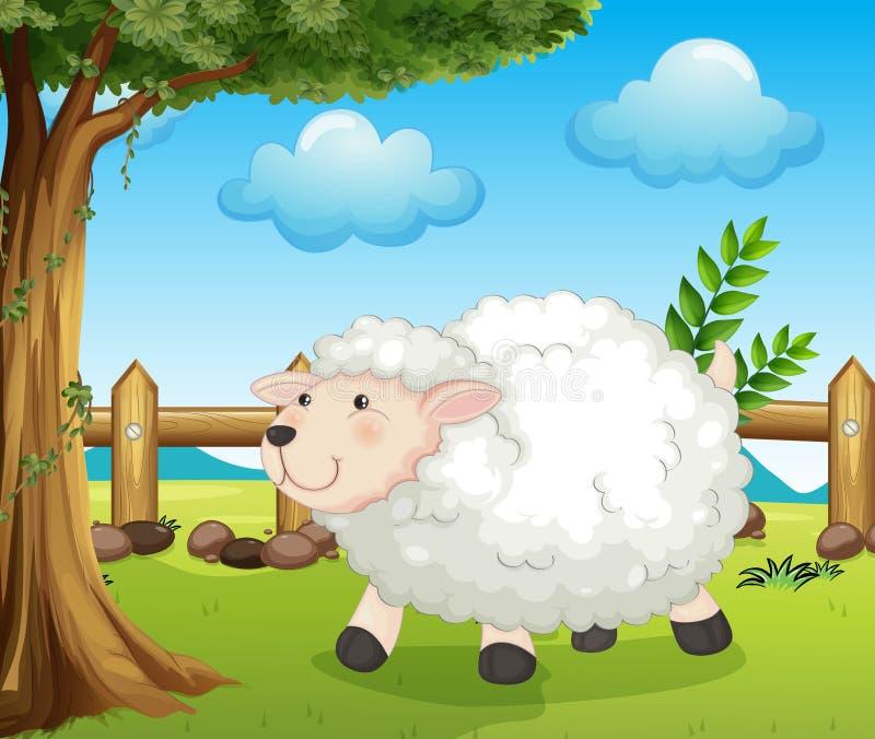 在篱芭里面的一只绵羊 库存例证