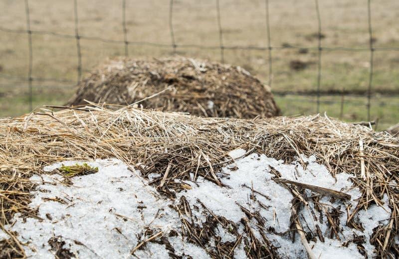 在篱芭附近冰冻在大包干草 免版税图库摄影