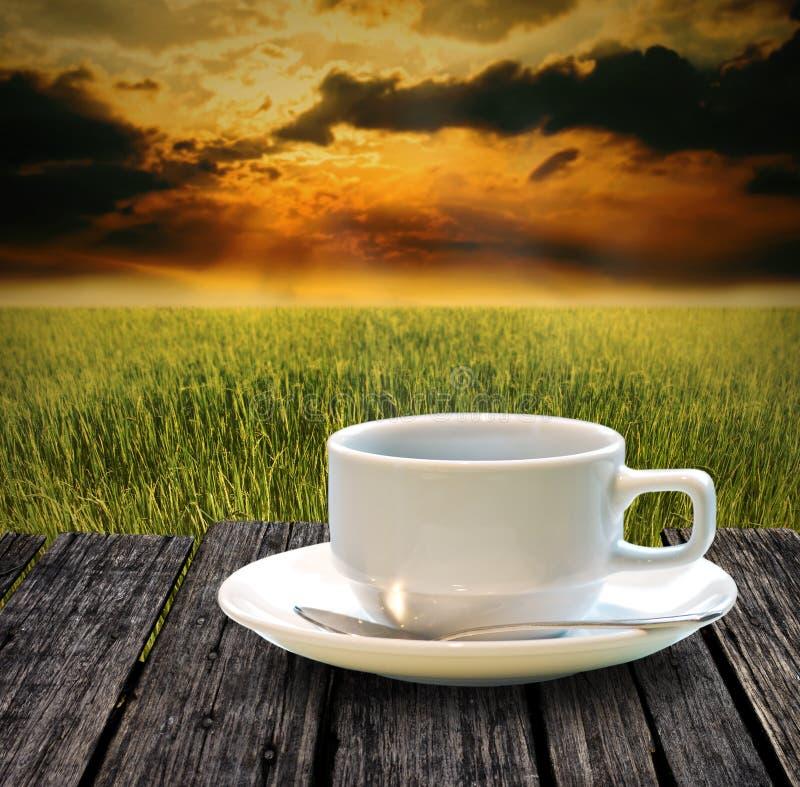 在米农场喝热的咖啡在早晨 免版税库存图片