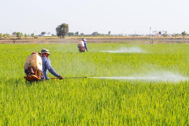在米领域的农夫喷洒的杀虫剂 免版税图库摄影