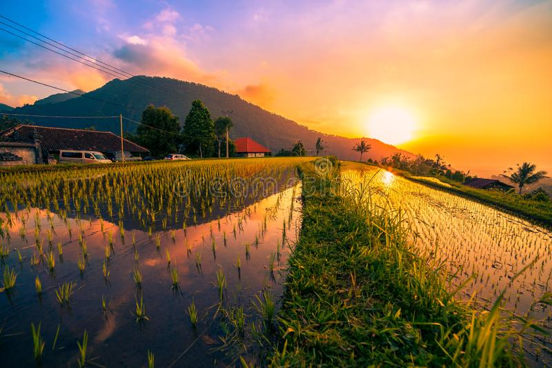 在米领域的日落在Jatiluwih露台Ubud,巴厘岛,印度尼西亚 免版税库存图片