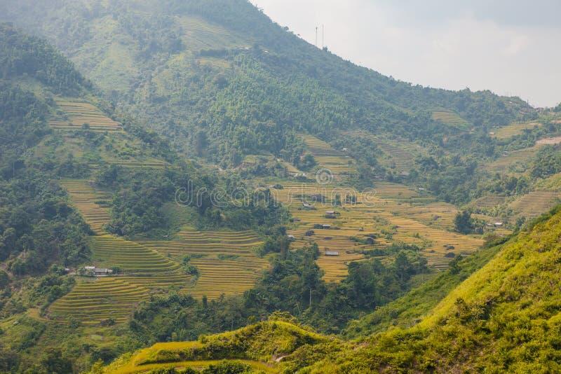 在米领域的黎明在西北越南准备收获 米调遣露台Hoang Su发埃,河江市省,越南 v 免版税库存照片