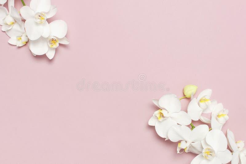 在粉红彩笔背景顶视图平的位置的美丽的白色兰花植物兰花花 E 免版税图库摄影
