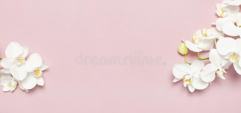 在粉红彩笔背景顶视图平的位置的美丽的白色兰花植物兰花花 E 库存照片