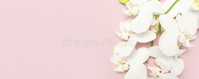 在粉红彩笔背景顶视图平的位置的美丽的白色兰花植物兰花花 E 免版税库存照片