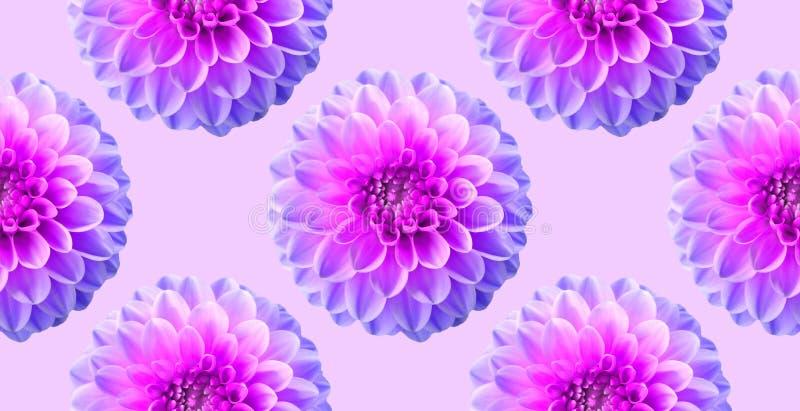 在粉色背景的霓虹菊花 无缝的模式 拼贴画艺术性的例证 免版税库存照片