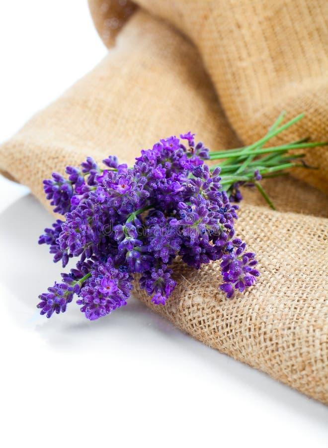 在粗麻布的淡紫色花 图库摄影