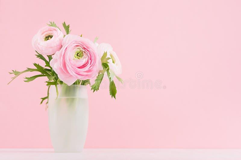 在精妙的玻璃花瓶的新鲜的春天毛茛花花束在白色木桌和淡色粉色背景上 库存照片