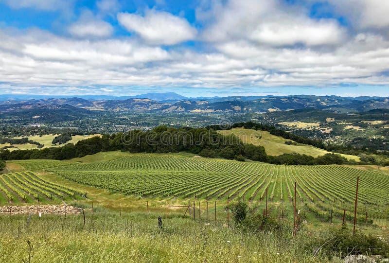 在索诺马县,加利福尼亚小山和葡萄园的一个看法  免版税库存图片
