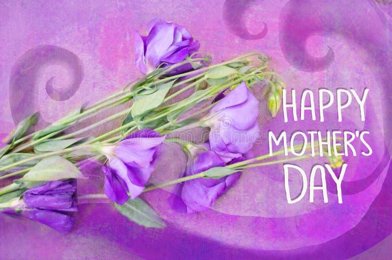 在紫罗兰色背景的紫罗兰色austoma 花难看的东西背景 贺卡母亲节 向量例证