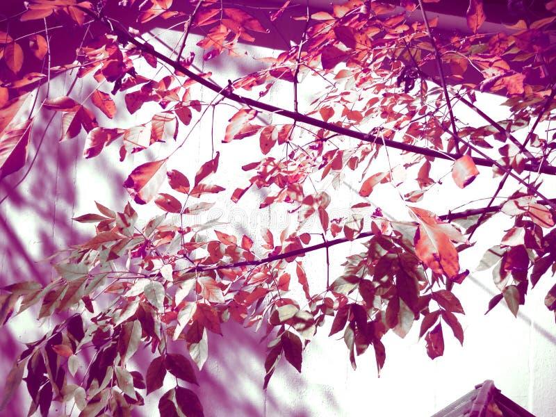 在紫色和橙色的夏天感觉 免版税图库摄影