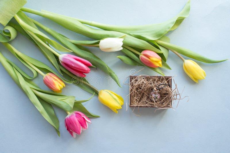 在紫色背景的春天郁金香 免版税库存照片