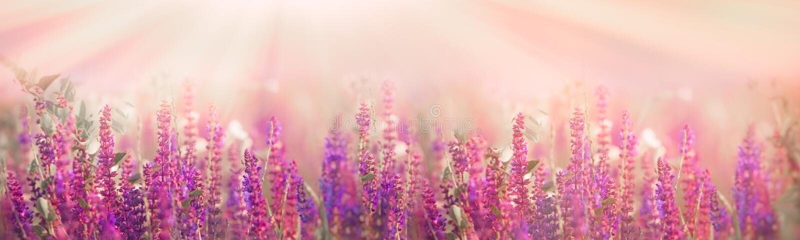 在紫色花的有选择性和软的焦点在草甸 图库摄影