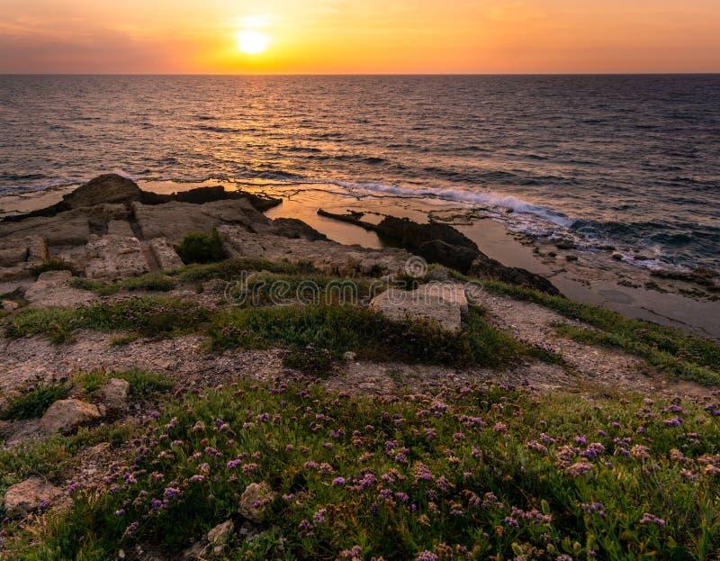 在紫色花的金黄日落亮光在多岩石的海滩 免版税库存图片