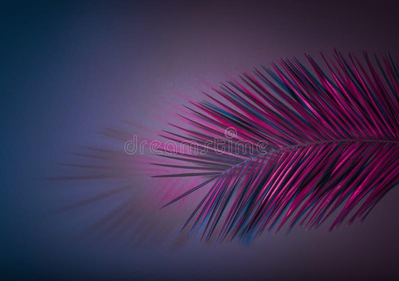 在紫色霓虹颜色辐形梯度背景的垂悬的棕榈叶 创造性的热带布局 免版税库存图片