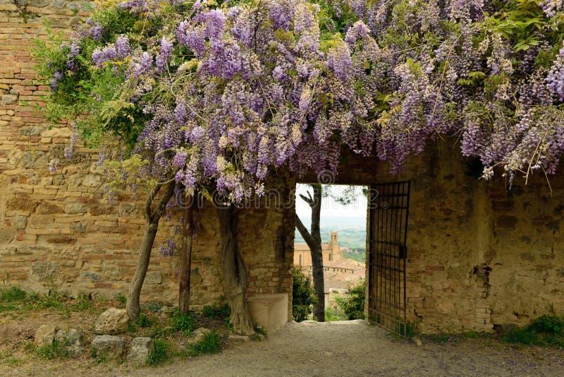 在紫藤,圣吉米尼亚诺,Parco della Rocca,托斯卡纳,意大利下的门 库存图片