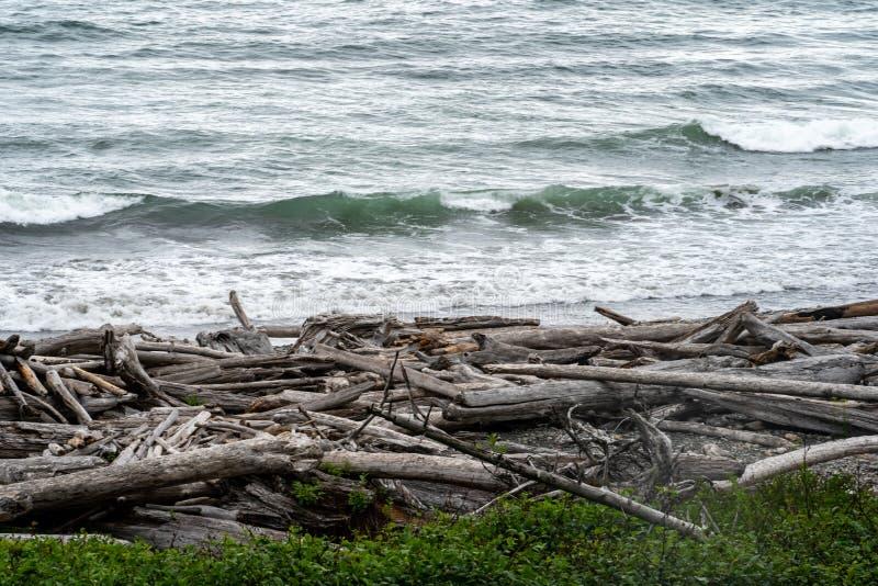在红宝石海滩岸的漂流木头堆在奥林匹克国家公园在华盛顿州 库存图片