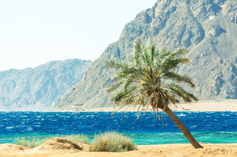 在红海的棕榈树高岩石峭壁背景的在埃及 库存图片