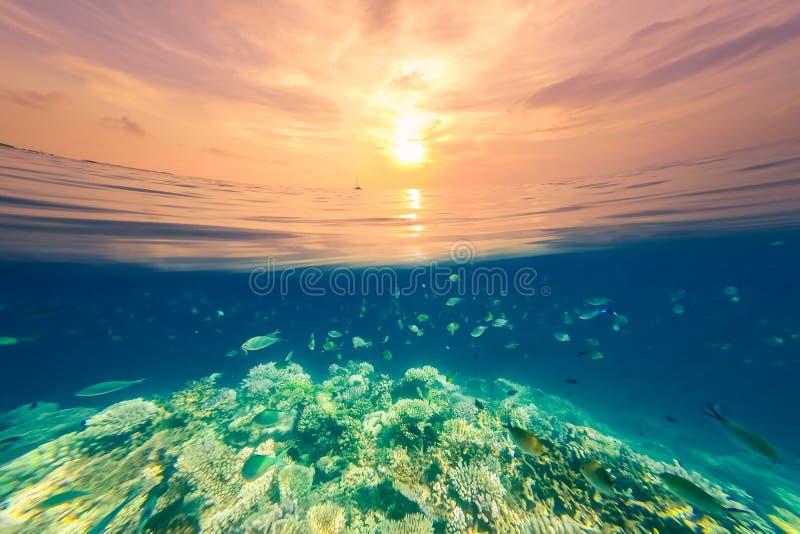 在红海的水下的珊瑚礁,美好的日落视图,有天空的不尽的海 免版税库存照片