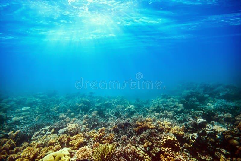 在红海的水下的珊瑚礁 库存照片